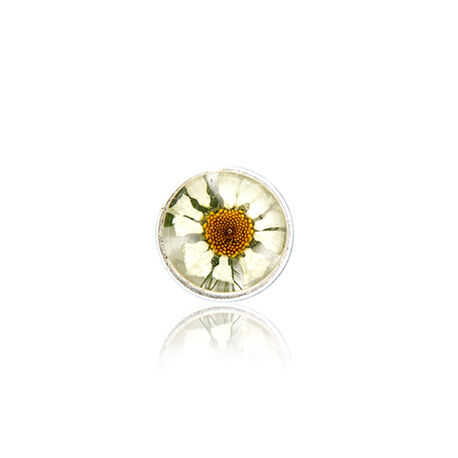 Flora insignia Margrietje MY iMenso