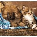 Zilveren fotolijst huisdieren