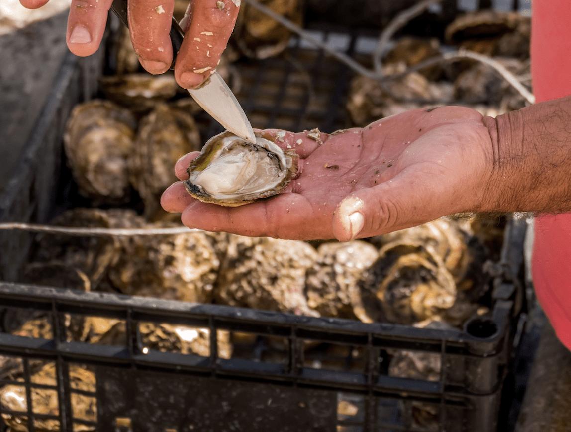 Een akoya parel uit een oester halen kennisbank Zilver.nl